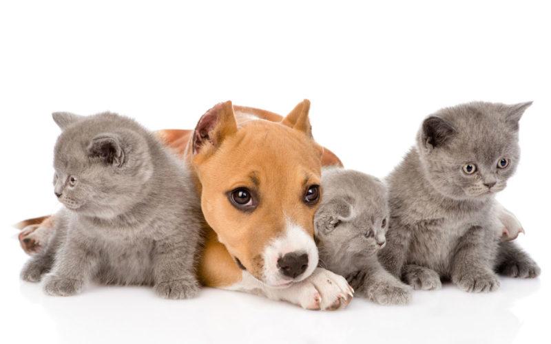 Quality DEFU pet food